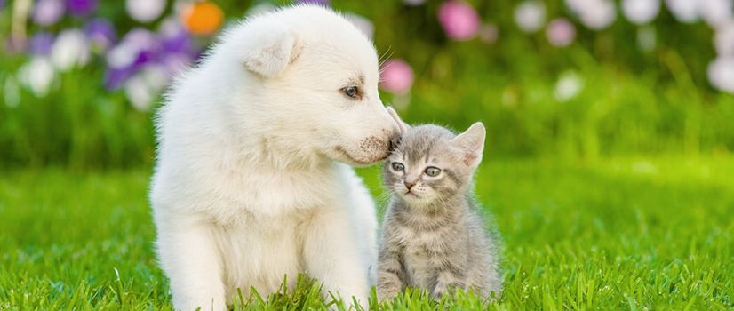 A very cute and healthy puppy and kitten spending some time together