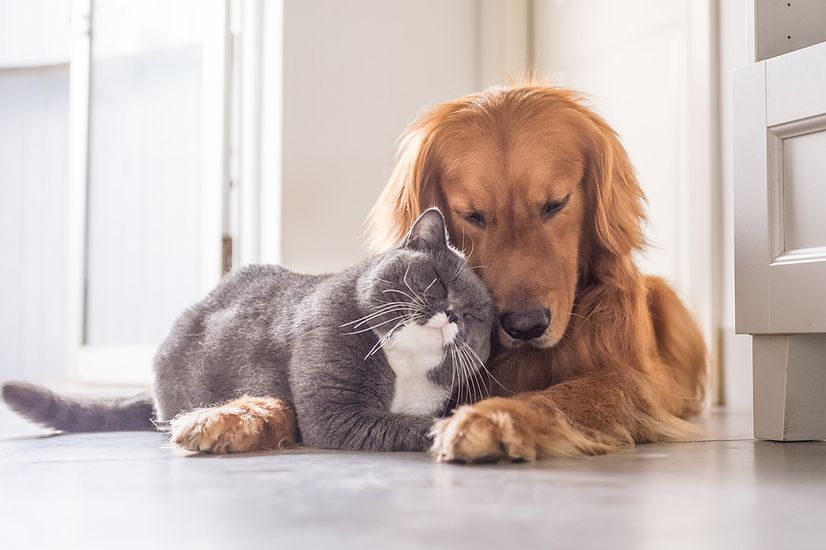 A dog and a cat resting and cuddling together at home