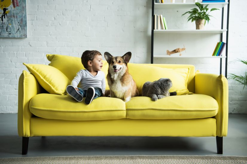 A toddler, dog and cat on a vibrant yellow couch