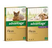 Bayer Advantage for Cats